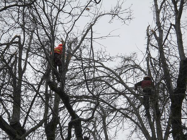 Professional Arborists